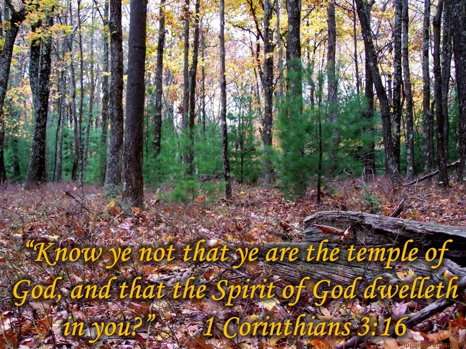 1 Corinthians 3:16
